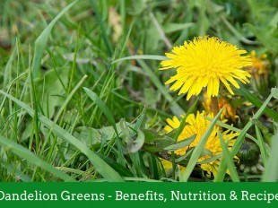 Dandelion Greens - Benefits, Nutrition and Recipes