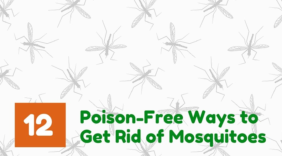 Poison Free Natural Ways to Get Rid of Mosquitoes