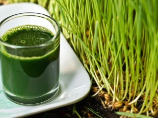 Wheatgrass Juice